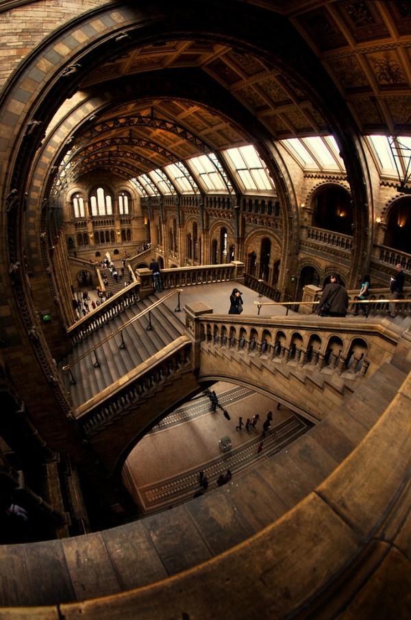 Le grand hall du musée d'histoire naturelle de Londres