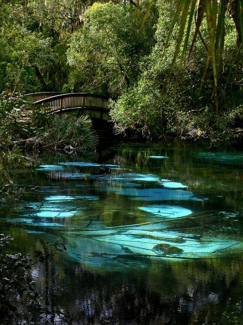 Piscine turquoises naturelles en Floride