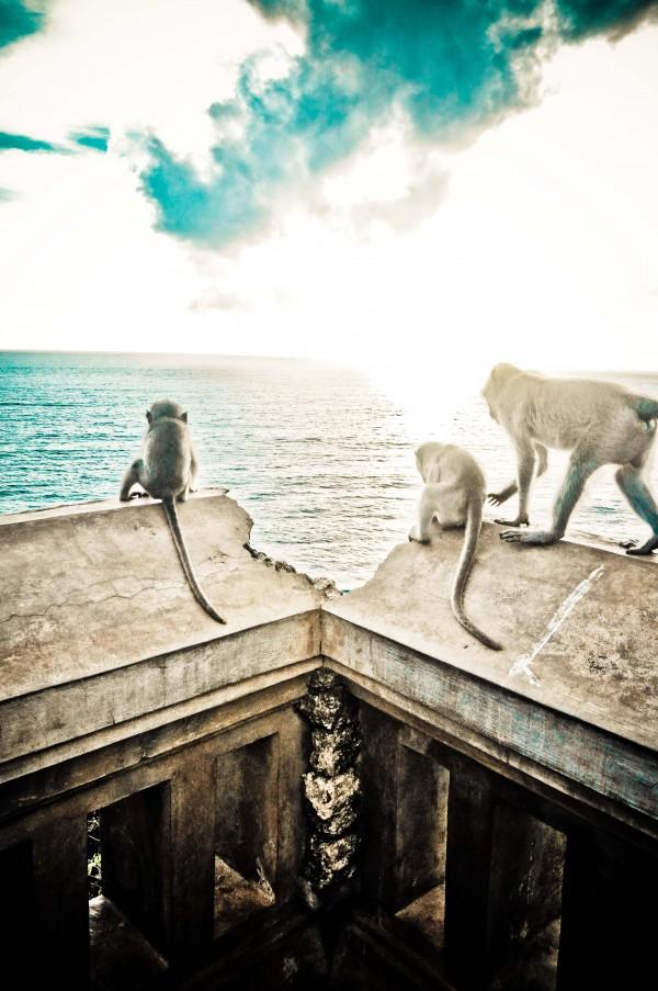 Les singes (voleurs) du temple d'Uluwatu à Bali
