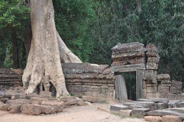Au temple de Ta Phrom, les arbres grignottent les murs