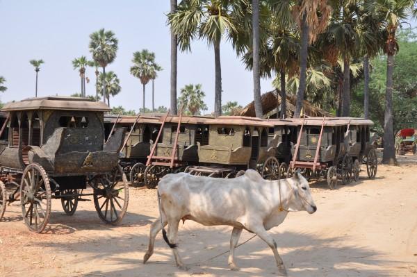 """Les anciennes """"diligences"""" de Bagan"""