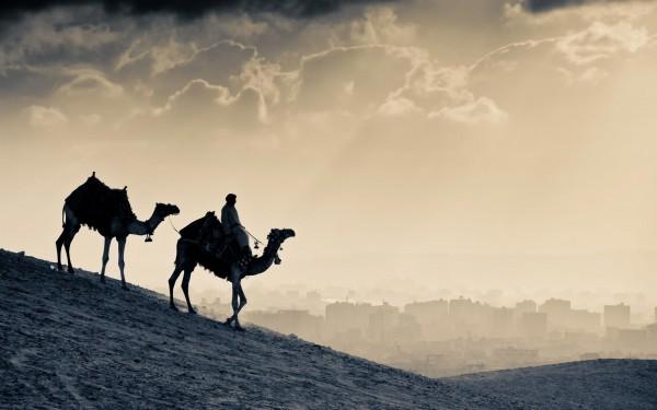 Caravane de chameaux en Jordanie