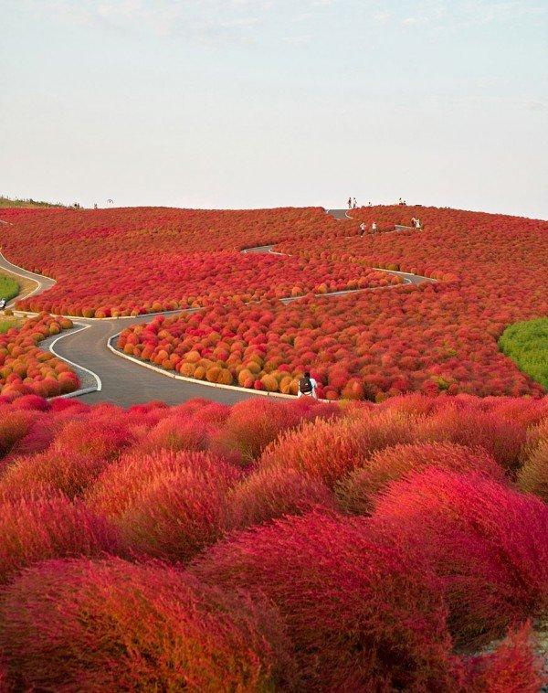 Le parc Itachi au Japon