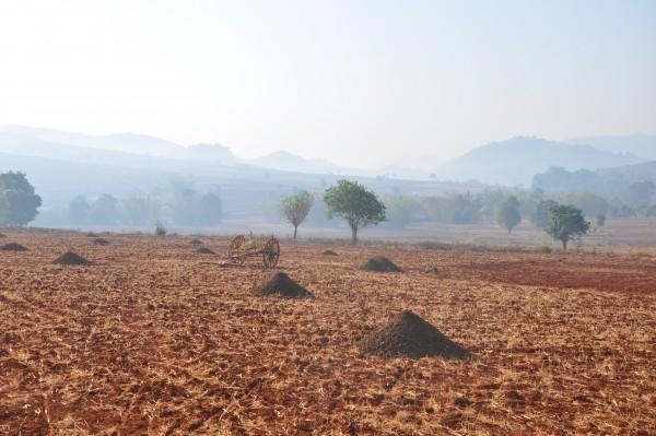 La brume recouvre encore les champs