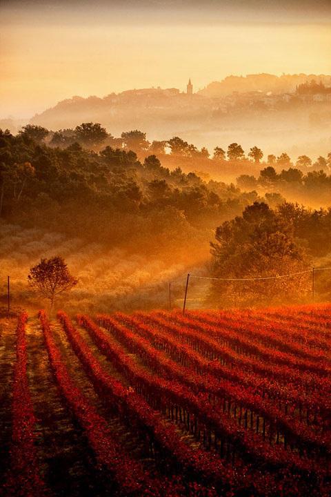 Les vignes de Toscane