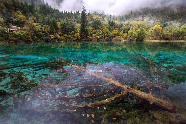 Arbre sous-marin au milieu d'un lac