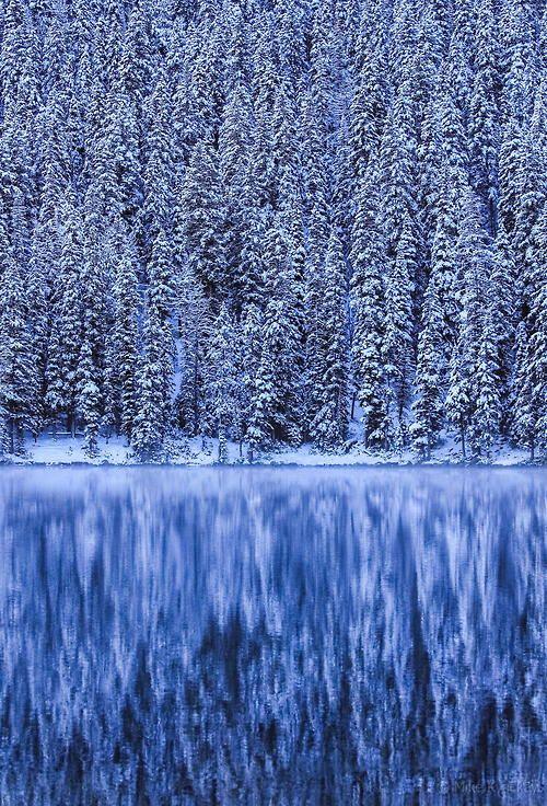 Forets enneigées du Montana