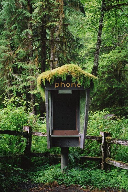 Les forêts de l'état de Washington