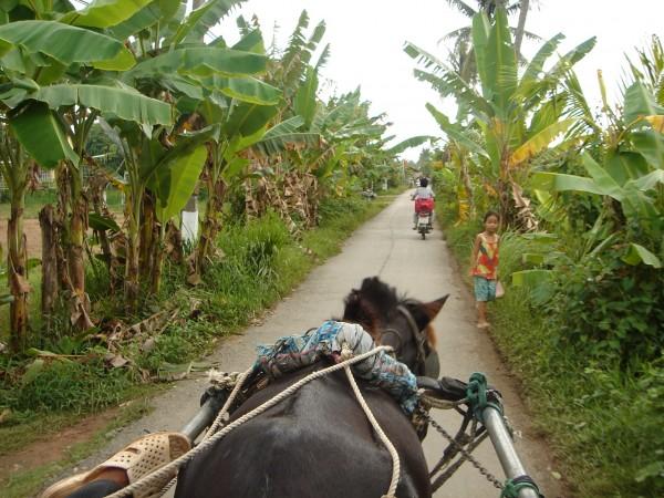 La carriole pour découvrir la campagne du vietnam