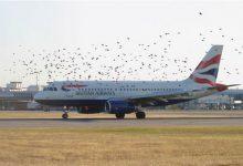 Quand un avion percute un oiseau, le résultat est surprenant et effrayant