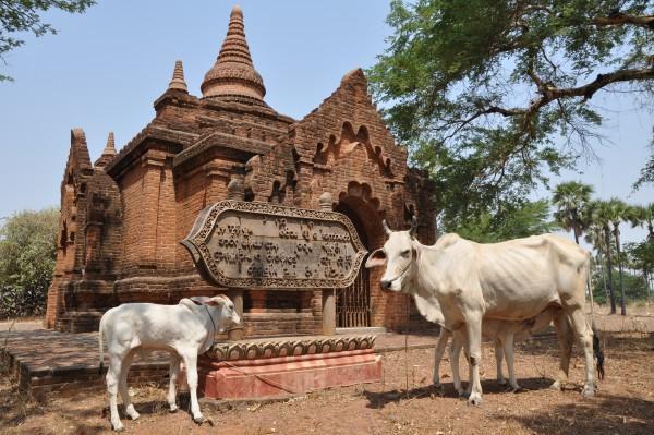 Carnet de voyage: Myanmar – Étape 13: BAGAN